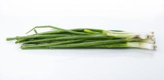 Cipolla di inverno verde fresca isolata su fondo bianco Fotografia Stock Libera da Diritti