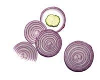 Cipolla e cetriolo isolati su fondo bianco immagine stock