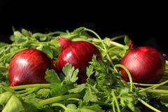 Cipolla e verdi Immagini Stock
