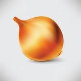Cipolla fotorealistica dell'icona Immagine Stock