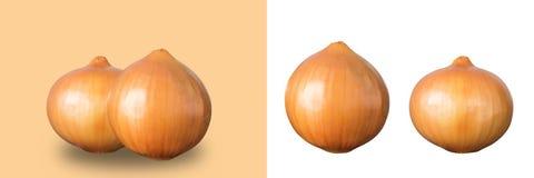 Cipolla isolata su fondo bianco e marrone Immagine Stock