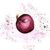 Cipolla rossa dell'acquerello con spruzzata e punto su fondo bianco Fotografia Stock Libera da Diritti