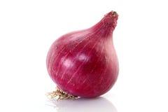 Cipolla rossa fresca Fotografie Stock