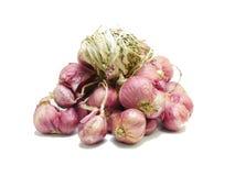 Cipolla su bianco Immagini Stock