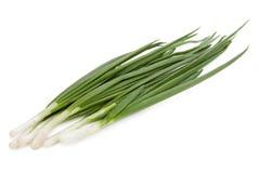 Cipolla verde Fotografie Stock