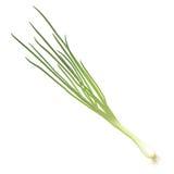Cipolla verde Fotografia Stock