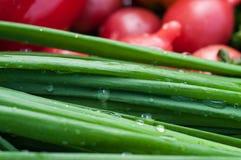 Cipolla verde con le gocce di acqua Fotografia Stock