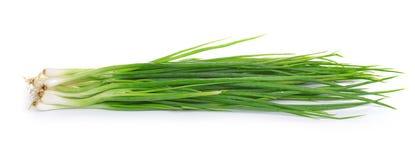 Cipolla verde isolata su fondo bianco immagine stock