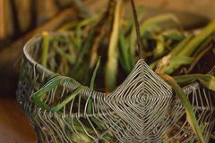 Cipolla verde nel canestro del metallo Fotografia Stock