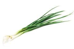 Cipolla verde Immagini Stock