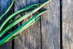 Cipolla verde su una vecchia tavola di legno grigia fotografia stock