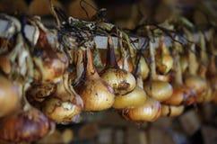 Cipolle Fotografia Stock