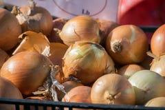 Cipolle al mercato dell'agricoltore di Brooklyn Fotografie Stock