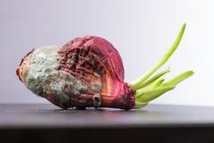 Cipolle ammuffite con i germogli verdi Non dia mai in su Fotografia Stock
