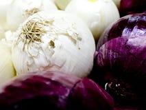 Cipolle bianche Immagini Stock