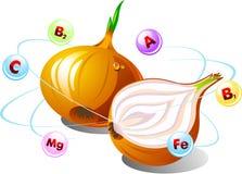 Cipolle con le vitamine Fotografie Stock
