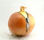 Cipolle con un fermo Fotografia Stock