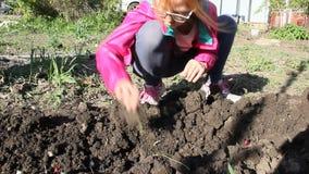 Cipolle della pianta dei bambini nel giardino archivi video