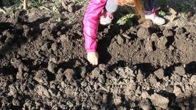 Cipolle della pianta dei bambini nel giardino video d archivio