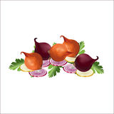 Cipolle di colore Fotografia Stock