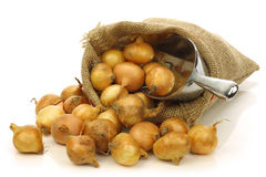 Cipolle di perla fresche in un sacco della tela da imballaggio Fotografia Stock Libera da Diritti