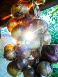 Cipolle di tramonto fotografia stock