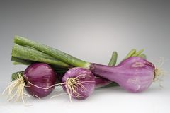 Cipolle di Tropea Fotografia Stock