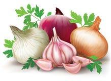 Cipolle ed aglio Fotografie Stock Libere da Diritti