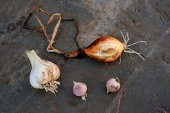 Cipolle ed aglio delle varietà locali coltivati su un'azienda agricola ecologica Fotografia Stock Libera da Diritti
