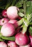 Cipolle fresche del mercato Fotografie Stock