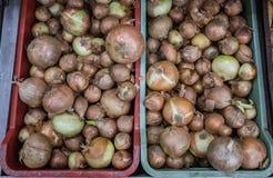 Cipolle nel supermercato fotografia stock