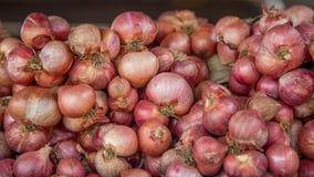 Cipolle rosse Fotografia Stock