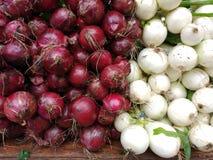 Cipolle rosse e bianche della cipolla, Fotografia Stock Libera da Diritti