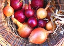 Cipolle rosse e dorate del Brown fotografia stock