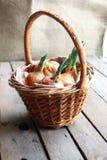 Cipolle in un canestro Fotografie Stock