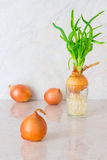Cipolle verdi con le radici in un bicchiere d'acqua Fotografia Stock