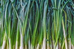 Cipolle verdi delle verdure di struttura del fondo Immagine Stock