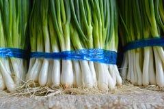 Cipolle verdi fresche Immagini Stock