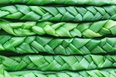 Cipolle verdi intrecciate in trecce Pianta del fondo Fotografia Stock Libera da Diritti