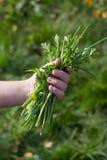 Cipolle verdi, prezzemolo, vitamine e nutrizione adeguata Fotografie Stock Libere da Diritti