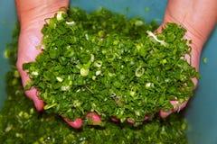 Cipolle verdi tagliate su un tagliere Fotografia Stock Libera da Diritti