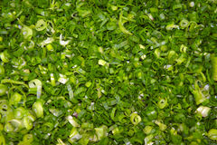 Cipolle verdi tagliate su un tagliere Fotografie Stock Libere da Diritti