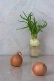 Cipolle verdi in un bicchiere d'acqua Cipolle gialle sulla tavola Fotografie Stock