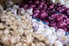 Cipolle, zenzero ed aglio Fotografia Stock Libera da Diritti
