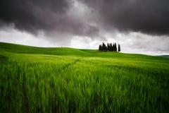Cipres in Toscanië Royalty-vrije Stock Afbeelding