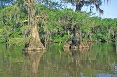 Cipresbomen in Bayou, het Park van de Staat van Meerfausse Pointe, Louisiane Royalty-vrije Stock Foto's