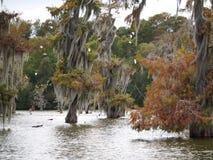 Cipresbomen in Meer Martin, Louisiane stock afbeeldingen