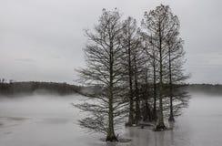 Cipresbomen in Mist en Ijs Royalty-vrije Stock Foto
