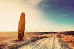 Cipresboom en gebiedsweg in Toscanië, Italië bij zonsondergang Valdorcia Royalty-vrije Stock Afbeeldingen