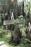 Cipresboom en Tillandsia usneoides in Barataria-Domeinmoeras Nieuwe Orlean Louisiane Royalty-vrije Stock Afbeeldingen